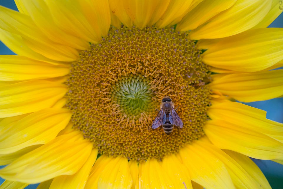 Inhaltstoffe von Honig