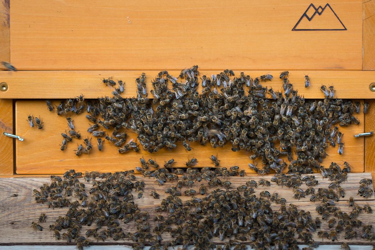 Klima im Bienenstock